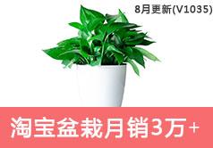 淘宝盆栽类目销售额从2123到32067